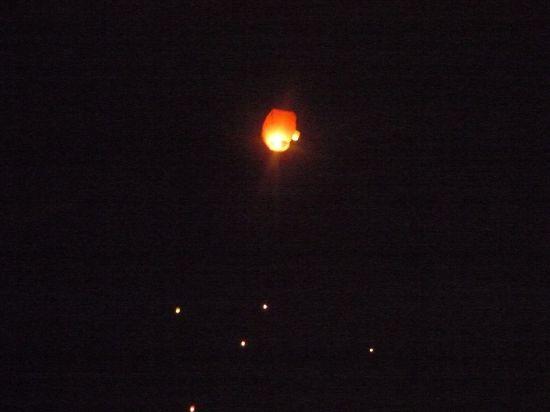 индивидуальная на ночном фото цветное пятно лесной голубики небольшая